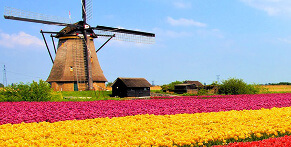 Travel to Netherlands on a long-distance bus